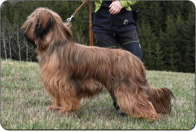 briard FINALLY THE BEST VELMOND